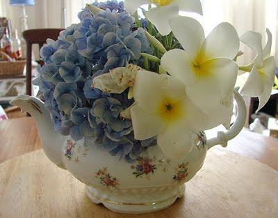 beule e flores1